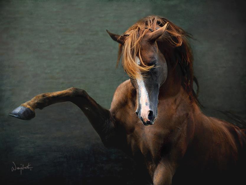 Wojtek Kwiatkowski – horse Photography