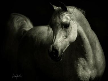Wojtek Kwiatkowski – Photographies chevaux