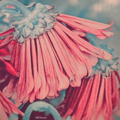 Fleurs mortes