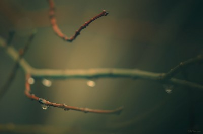 Ambiance sous bois