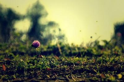 Petite fleur [Oct. 2011]
