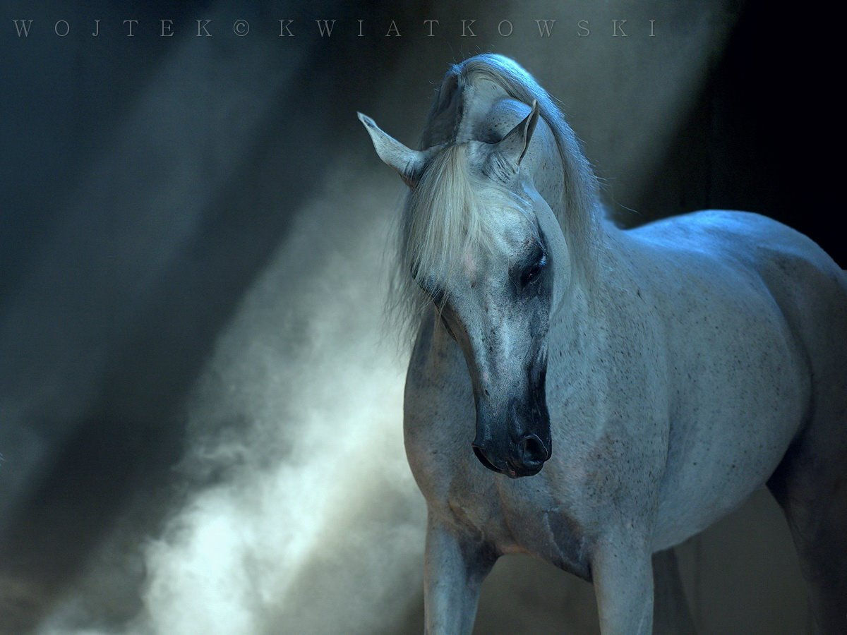 Wojtek Kwiatkowski Equine Photography