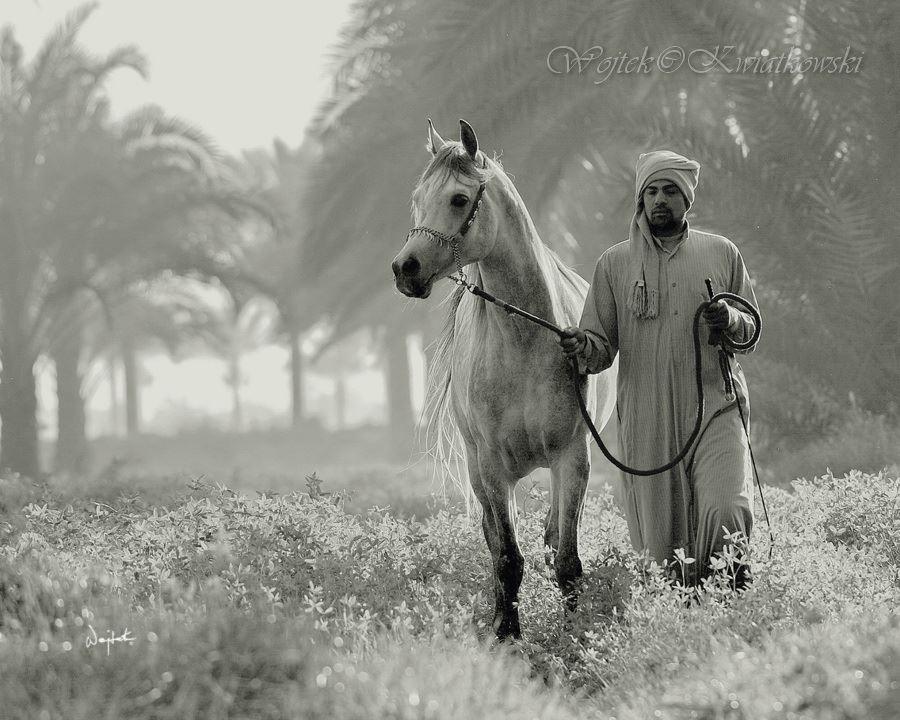 Wojtek Kwiatkowski Equine Photography – egypt