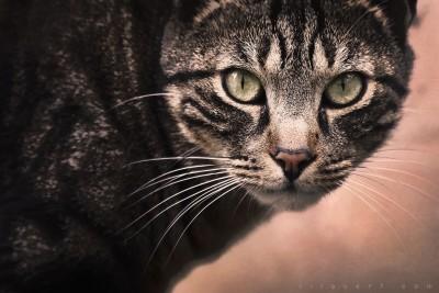 My fabulous cat – ©LilaVert