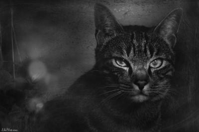 Chat portrait – Timousse