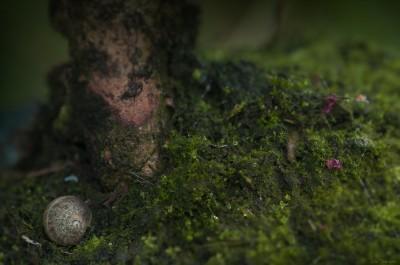 Macro – Ambiance escargot – sous bois