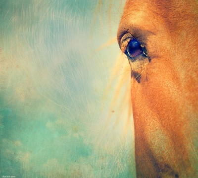 Horse Eye Textured ©LilaVert