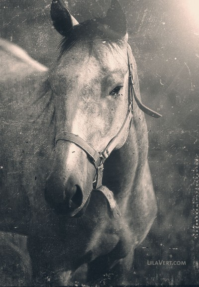 Horse vintage – Cheval photography – ©LilaVert