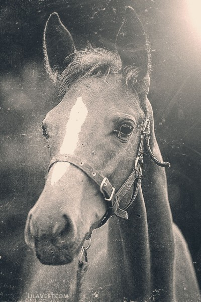 Horse – vintage photography – Diapo – ©LilaVert
