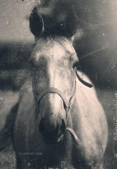 Horse vintage – Diapo photography – ©LilaVert