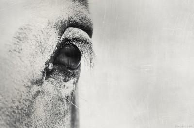 Macro proxy Eye Horse V2 grey – ©LilaVert