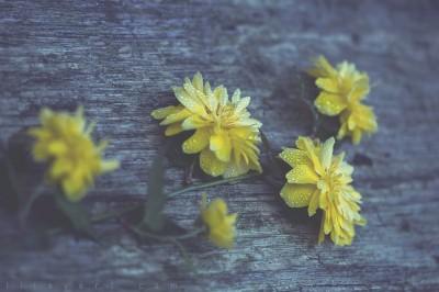 Macro flowers ©LilaVert