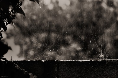 Rainy day / Impact pluie – #gouttes #pluie #rain #photo #LilaVert #sepia #nikon