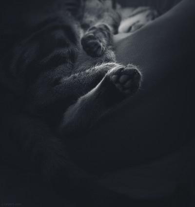 The sleeper / ©LilaVert