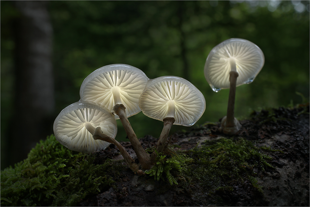 Bernd Rugemer – Moonshroom photography