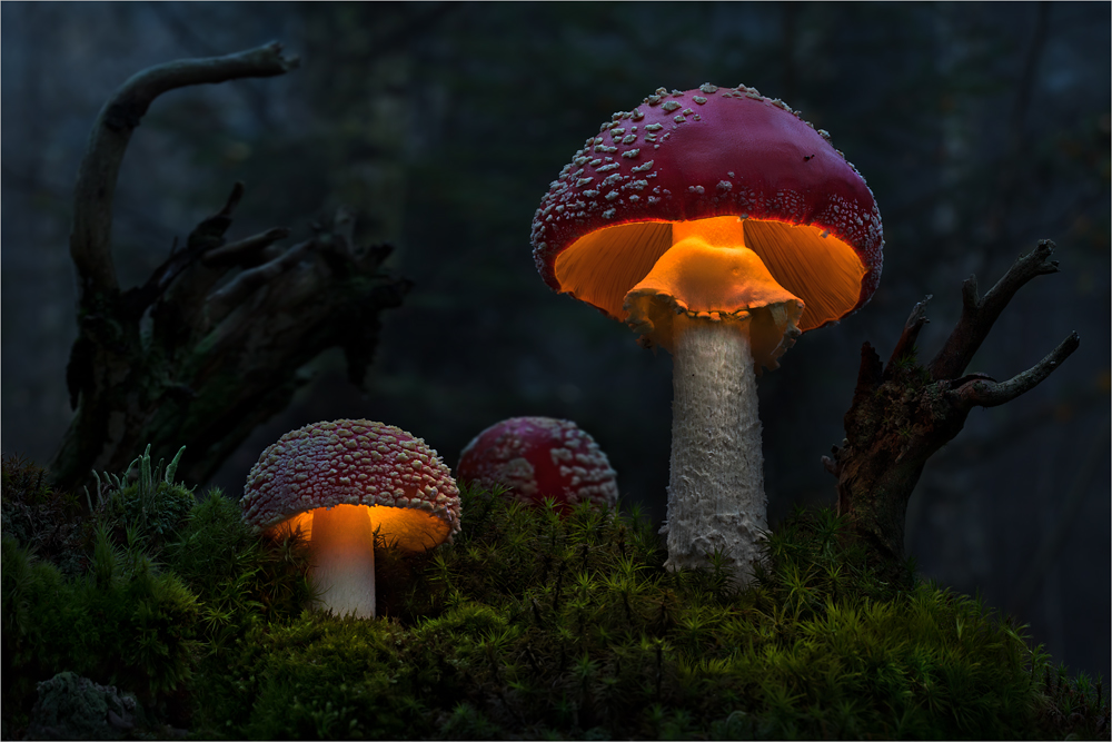 Bernd Rugemer – Magic Moonshroom photography