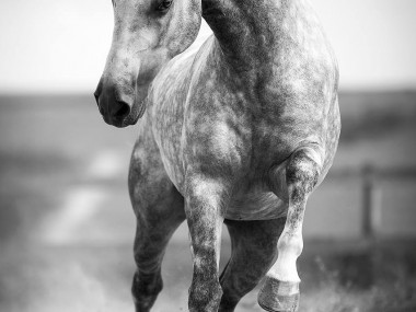 Raphael Macek – Horse Photography