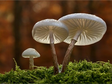 Bernd Rugemer – Moonshroom photographies