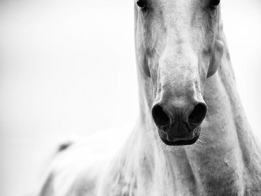Raphael Macek Photography, chevaux