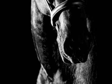 Raphael Macek Photography, horse