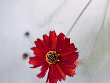 MAGDA WASICZEK FOTOGRAFIA – fleur