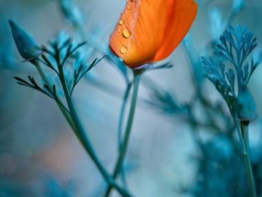 MAGDA WASICZEK FOTOGRAFIA – fleurs