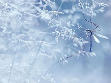 photo hiver macro-Magdalena Wasiczek