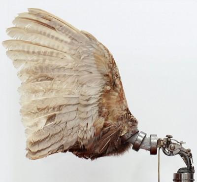 Pheasant Wings – Lisa-Black 2012 / http://www.lisablackcreations.com/