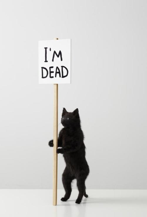 David Shrigley – I'm dead