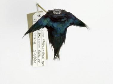 Jane Edden – Flying jackets – Ornithomorph exibition