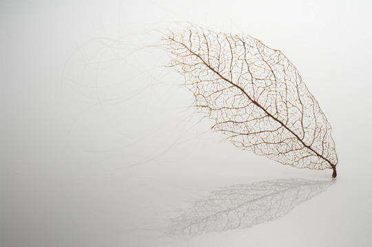 Jenine Shereos – Art Hair – leaf_02