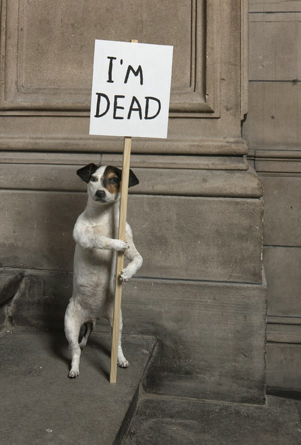 Dog, Im dead – http://ow.ly/pacVn