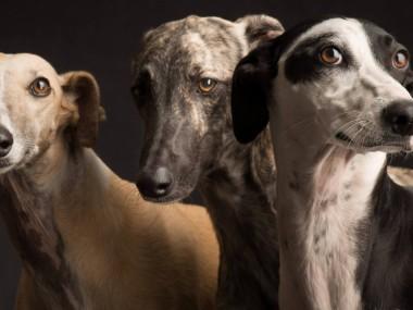 Paul Croes – Photographie animaliere, portraits studio – chiens