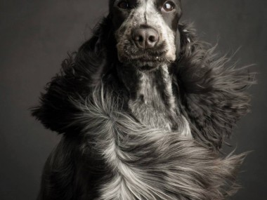 Paul Croes – Photographie animaliere, portraits studio