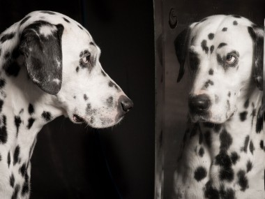 Paul Croes – Photographie animaliere, portraits studio