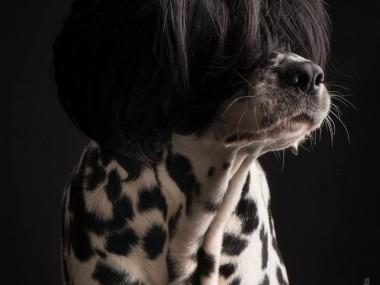 Paul Croes – Photography animal