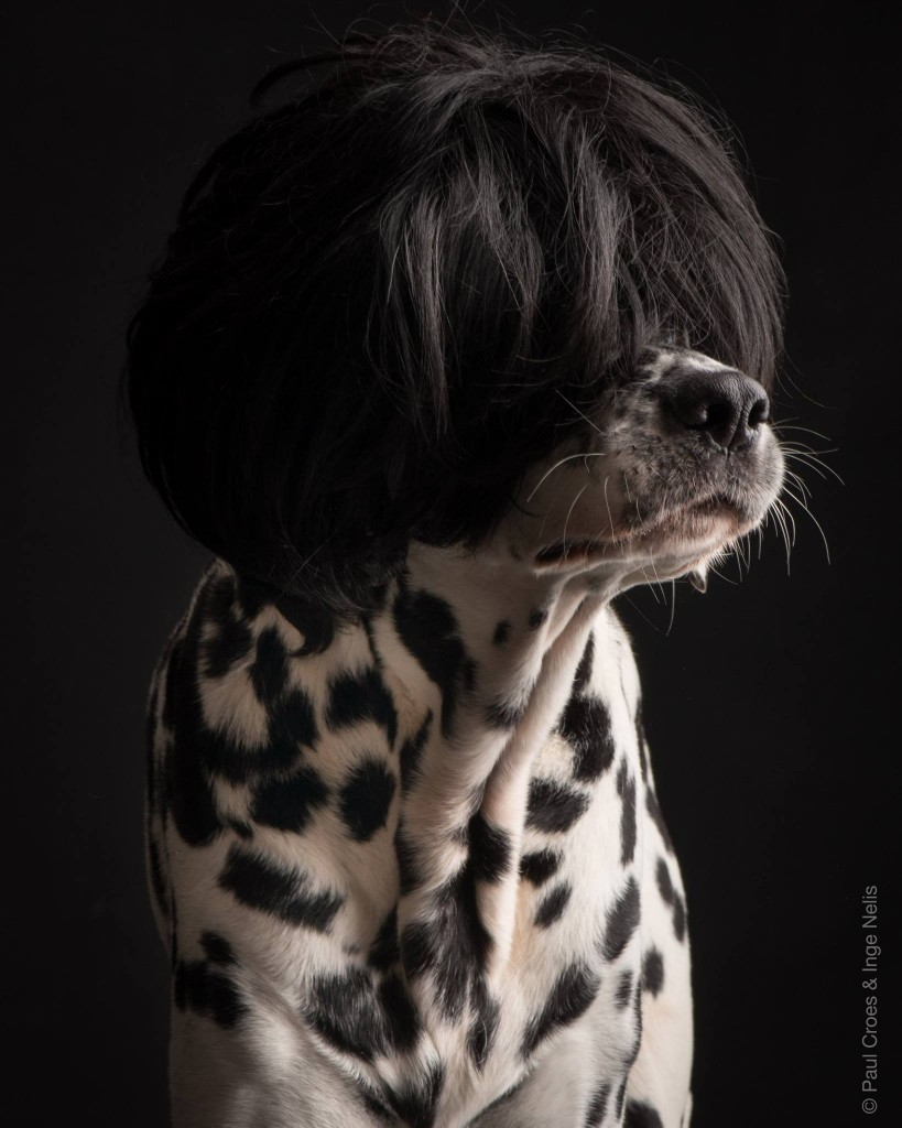 Paul Croes - Photography animal