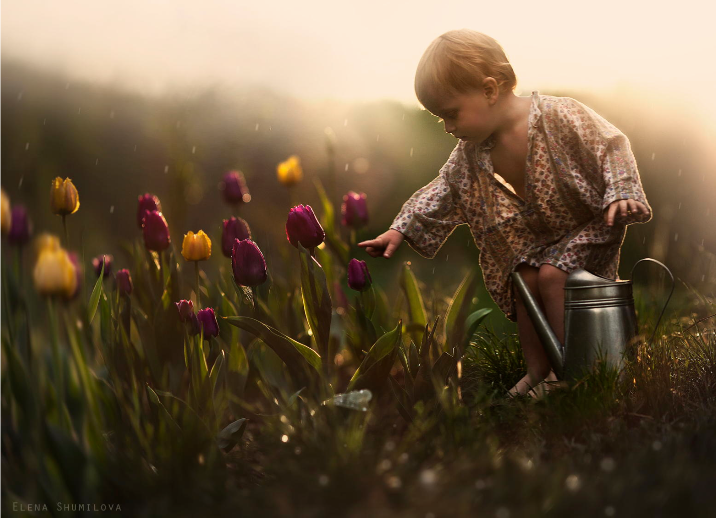 Elena Shumilova – Photographie – Tulipes