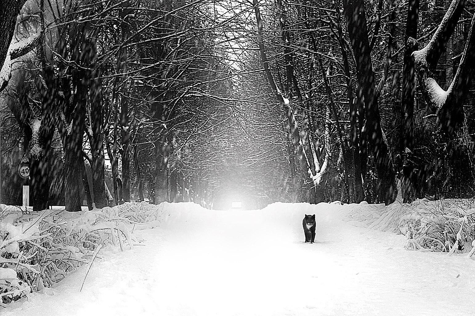 Elena Shumilova – Photographie5