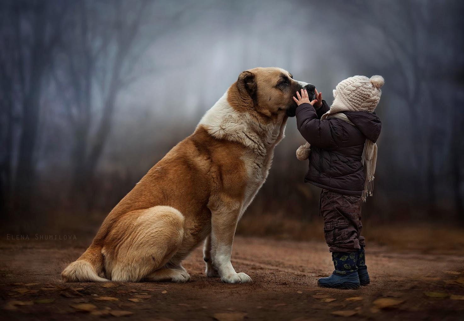 Elena Shumilova Photography #dog #child #animallovers #ambiance