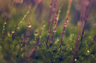 Enchanted world – Moss / Macro ©LilaVert
