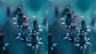 Fly ladybug – Macrophotography ©LilaVert