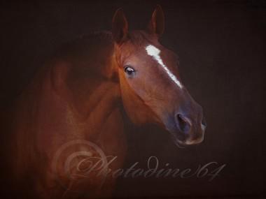 PHOTODINE64 – photographie equine