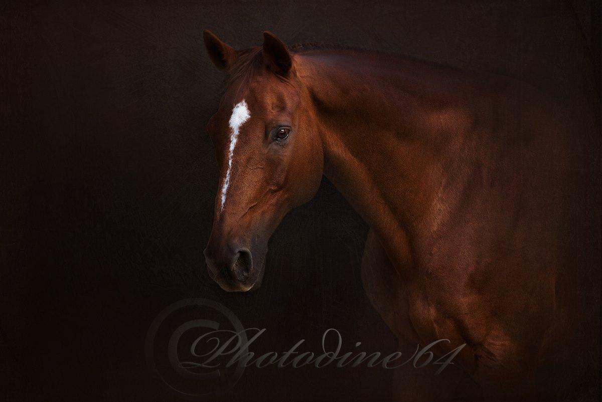 PHOTODINE64 – photographie equine2