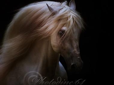 PHOTODINE64 – photographie equine3