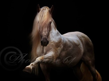 PHOTODINE64 – photographie equine4