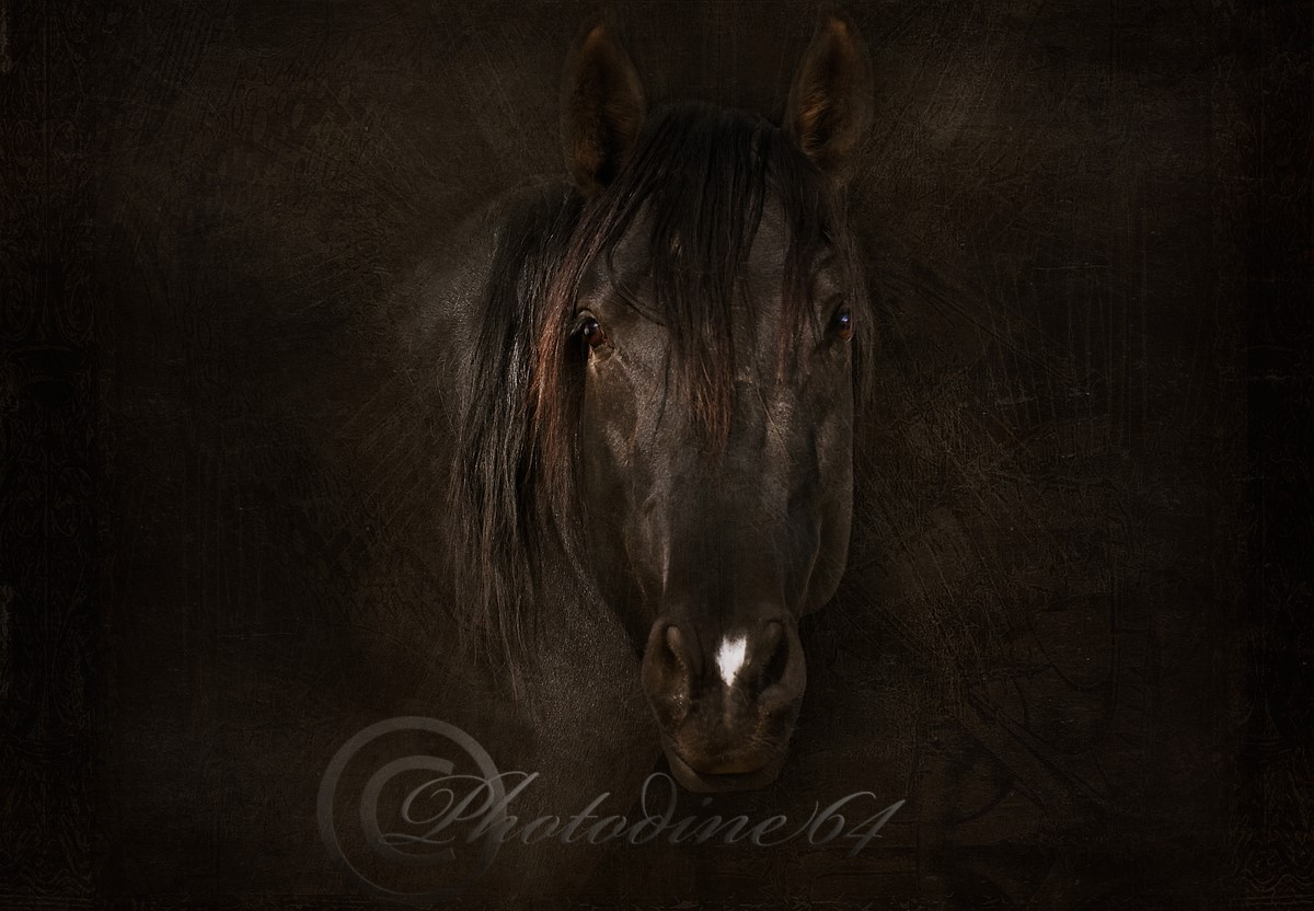 PHOTODINE64 – photographie equine5