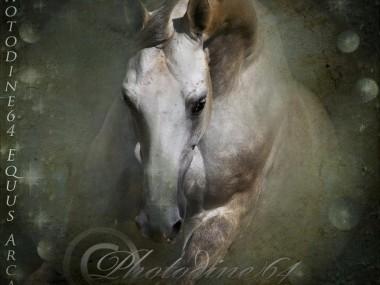 PHOTODINE64 – photographie equine6
