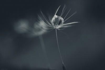 Macro drops / ©LilaVert
