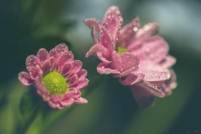Fairy day – Macrophotographie fleurs ©LilaVert